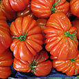 Cannes Tomatoes
